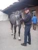 Pferde_7
