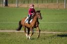 Pferde_9